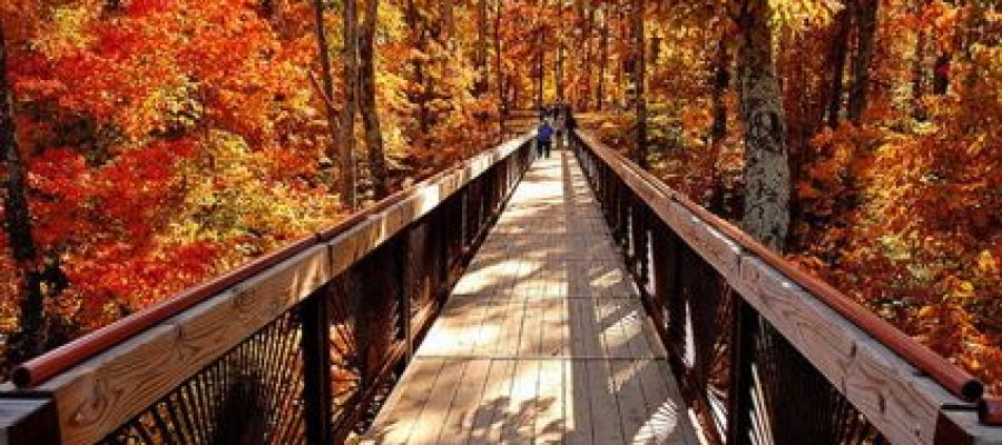 Fall Color at Bernheim Arboretum
