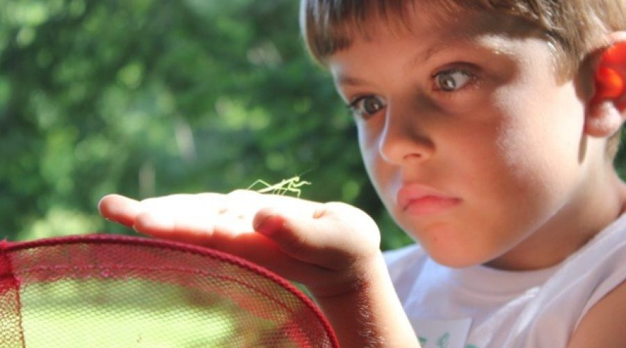 Bernheim Arboretum is alive with creatures great and small during September.