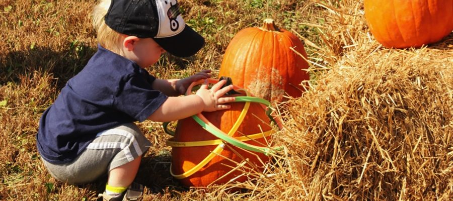 Get ready for Fall…y'all. Bernheim Arboretum's ColorFest, October 19-20.